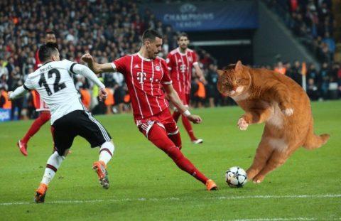 Chú mèo đại náo trận đấu knock out của Bayern Munich vs Besiktas