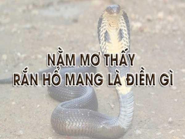 Nằm mơ thấy rắn hổ mang điềm lành hay điềm giữ