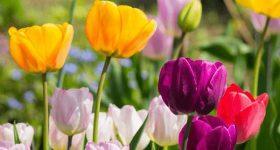 Mơ thấy hoa – Điềm báo và con số may mắn của giấc mơ thấy hoa