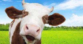 Giải mã ý nghĩa giấc mơ thấy bò là điềm báo gì