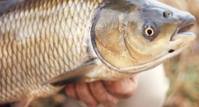 Mơ thấy bắt cá là điềm gì, con số nào mang lại may mắn?