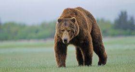 Mơ thấy gấu đánh con gì? Ý nghĩa giấc mơ thấy gấu