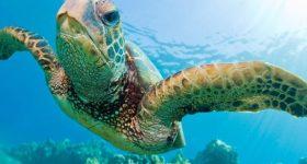 Chiêm bao thấy con rùa biển có điềm báo gì đặc biệt?