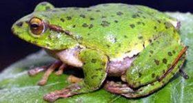 Mơ thấy ếch – Ngủ mơ thấy ếch đánh lô đề con gì