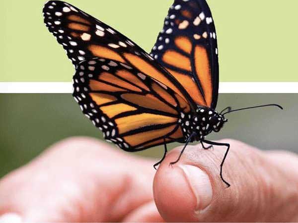Mơ thấy bướm – Giải mã bí ẩn giấc mơ thấy bướm