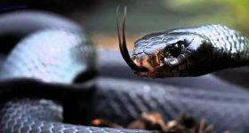 Mơ thấy rắn đen đánh con gì chắc ăn, là điềm hên hay xui?