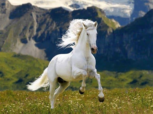Mơ thấy ngựa điềm báo lành hay dữ? Đánh con gì may mắn?