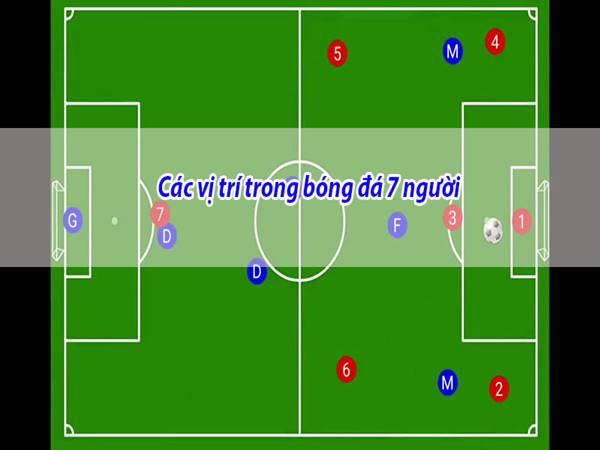 Các vị trí trong bóng đá 7 người có vai trò như thế nào?
