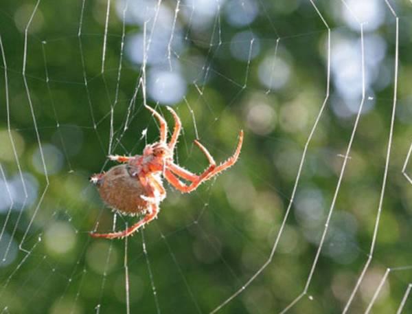 Điềm báo giấcmơ thấy con nhện mang đến là gì? Nên đánh số mấy