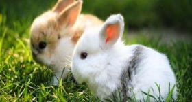 Ngủ mơ thấy thỏ đánh lô đề số mấy ? là điềm hên hay xui ?