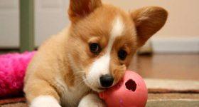 Ngủ mơ thấy chó đánh lô đề con gì ? Là điềm lành hay dữ ?